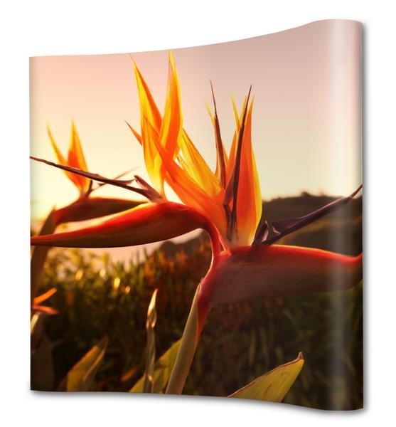bestel uw nieuwe prints voor uw popup presentatiewand bij